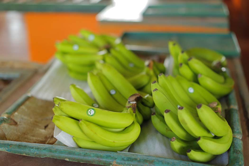 5 - Fruits & Vegetables (4)
