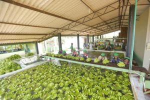 5 - Fruits & Vegetables (8)