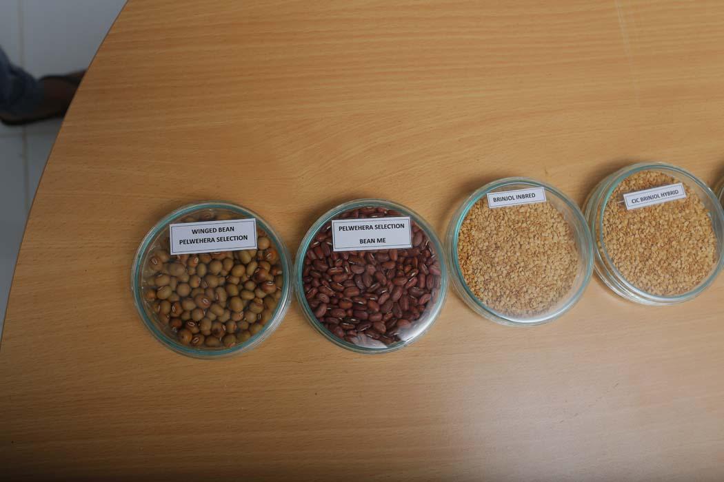 9 - Seeds (7)