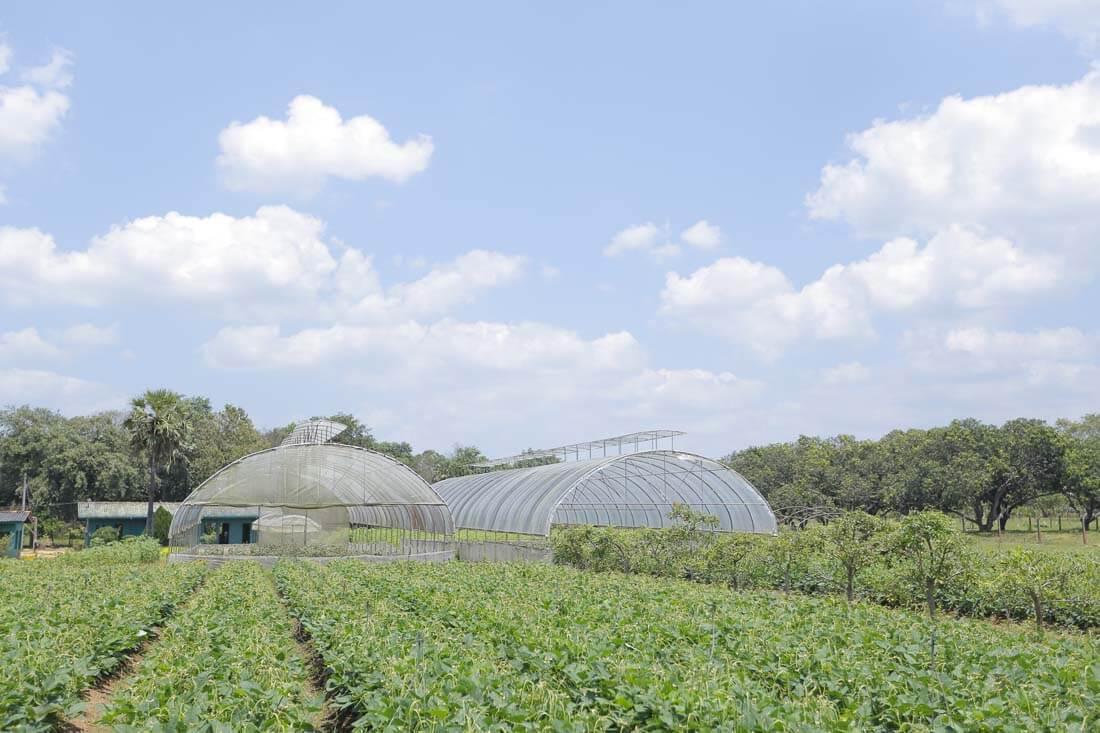 5 - Farms (11)-2