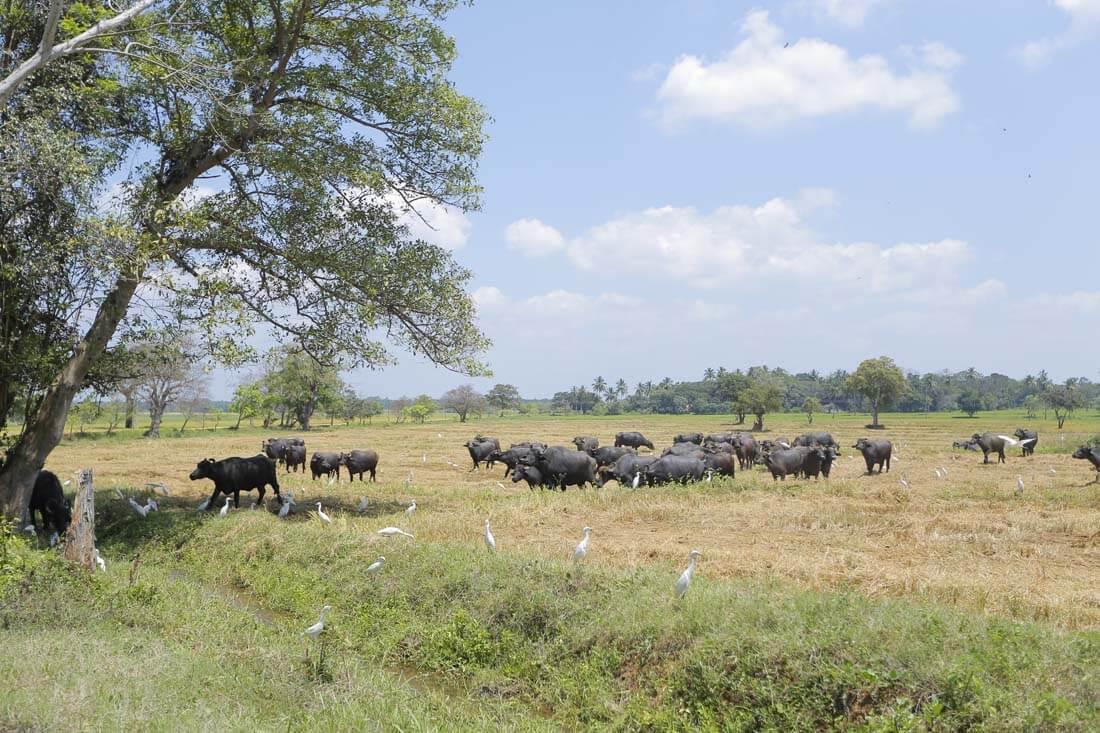 5 - Farms (8)