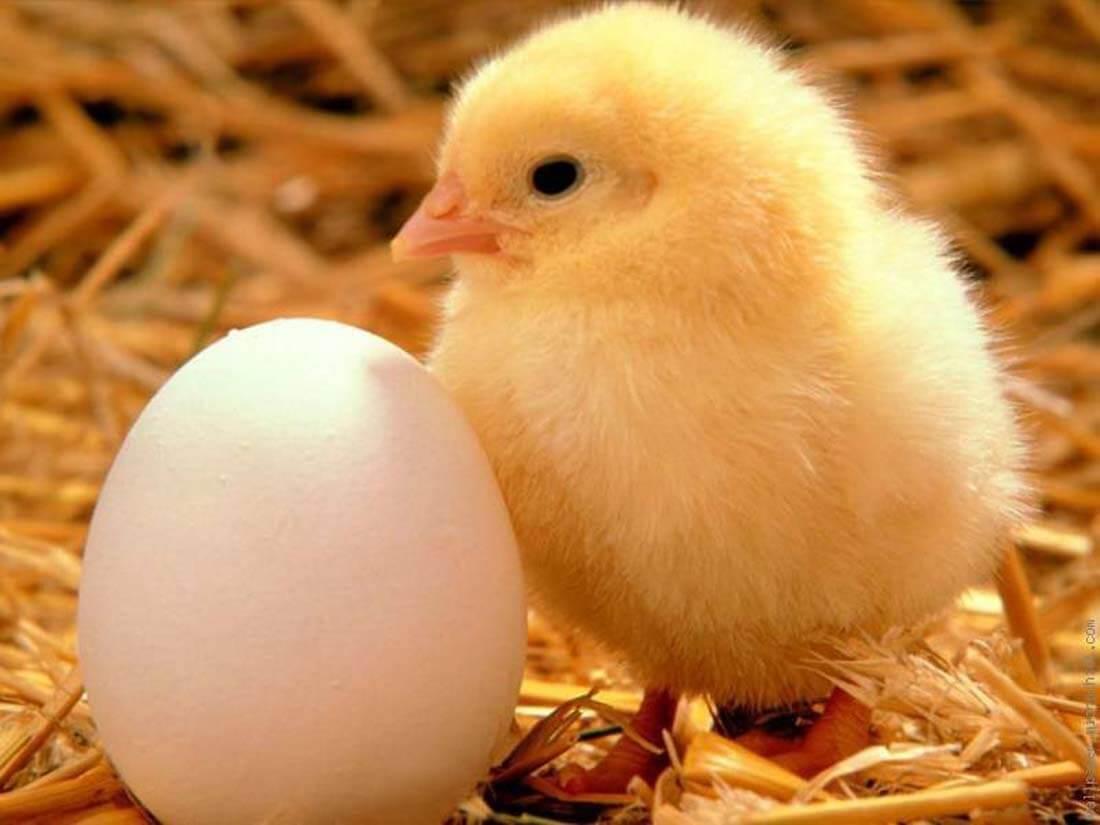 16 - Animal Nutrition (Feeds) (2)