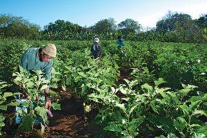 Crop Solutions - 5 June (2)